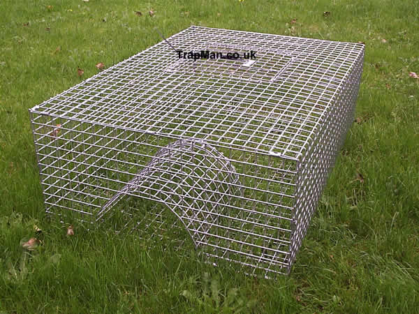 Pheasant Trap, multi catch pheasant trap ideal for clearing up loose birds at the end of the season.