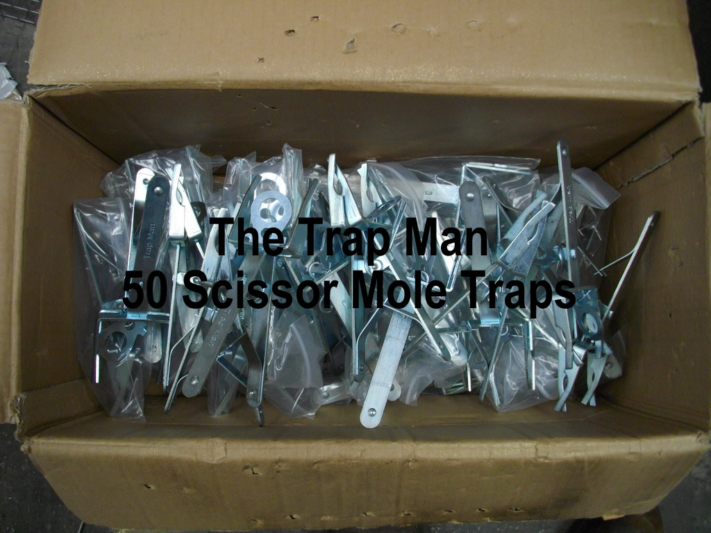 Fifty Scissor Mole Traps, good mole traps cheap