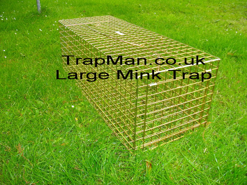 "Large mink, polecat trap, Much larger trap for mink, wildcat or polecat size 27""x10""x9"""