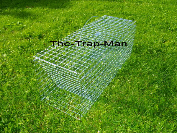 "wood pigeon trap in the closed ""tripped"" position"