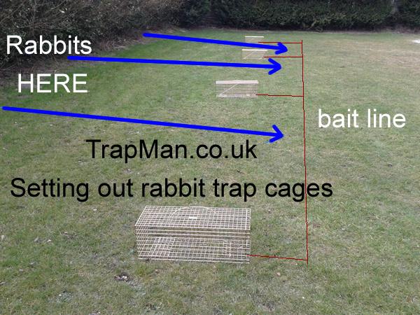 Folding Rabbit Trap The Trap Man Humane Live Catch